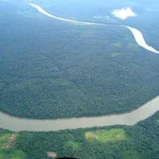 Brazil rainforest for sale